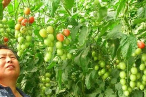 种植蔬菜技术一般去哪里学习