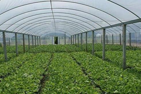 下半年农村创业哪些项目较好