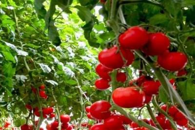 开一个中农共信有机瓜菜工厂店怎么样 大好商机等你来