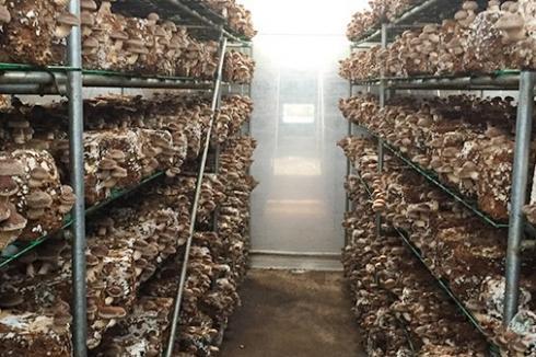 养殖创业做什么 中盛永基食用菌更具发展