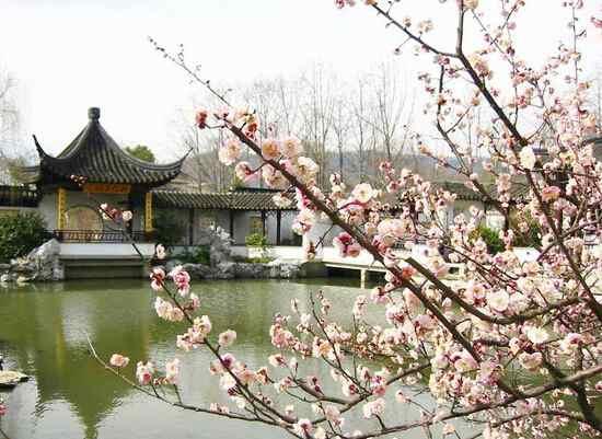 杭州超山梅花节将于1月19日在余杭超山风景区举办届时,该活动延续至