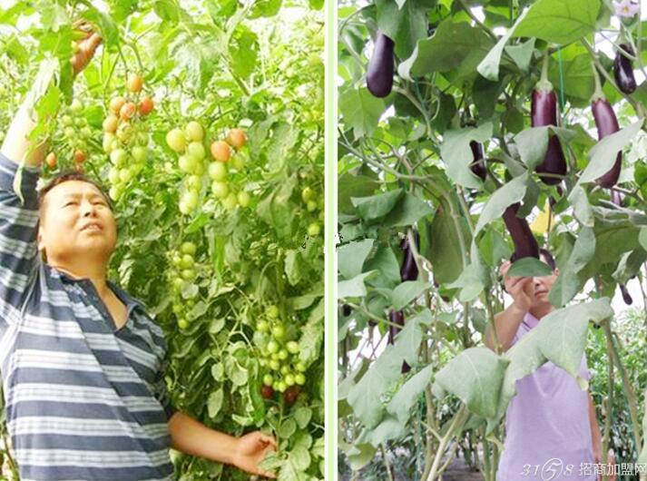 种植大棚蔬菜前景如何