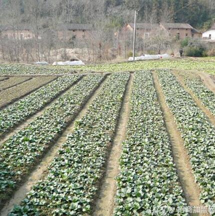 都市菜园之蔬菜种植基地