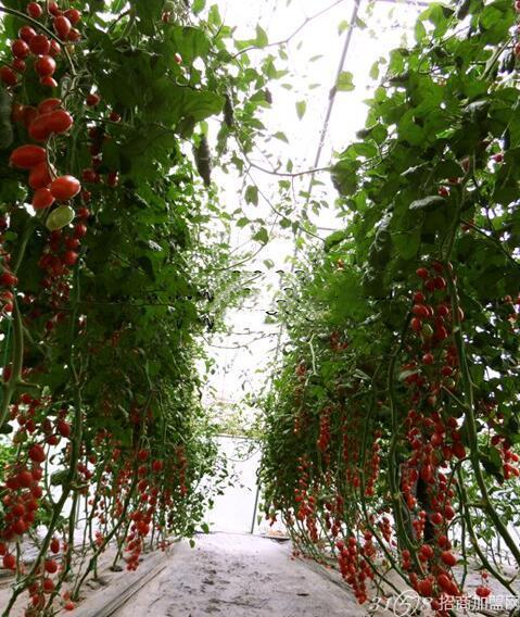 怎样种植有机蔬菜