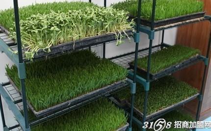 蔬菜培育加工厂加盟 万元投资轻松致富