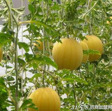 有机蔬菜投资多少钱
