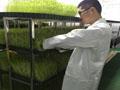 菜立方芽苗菜加盟产量高吗