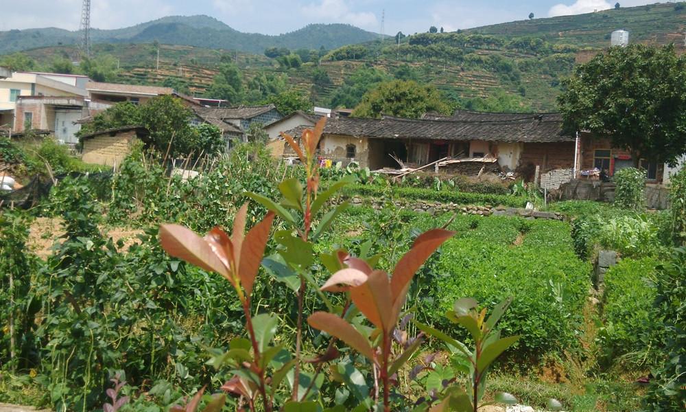 首页 找茶 > 安溪茶校之行  2虎邱镇是著名的山水茶乡,是休闲旅游好