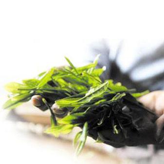 绿茶新贵太平猴魁要如何保存才能不掉价