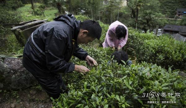 桐木关为什么能成为正山小种的原产地