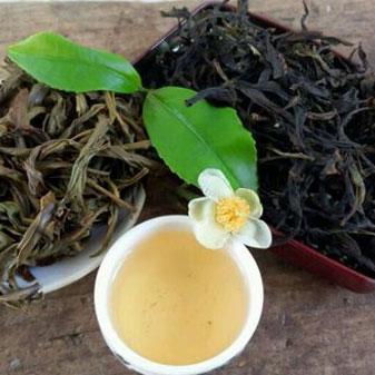 凤凰单丛茶属于什么茶 带你认识真正的凤凰单丛茶