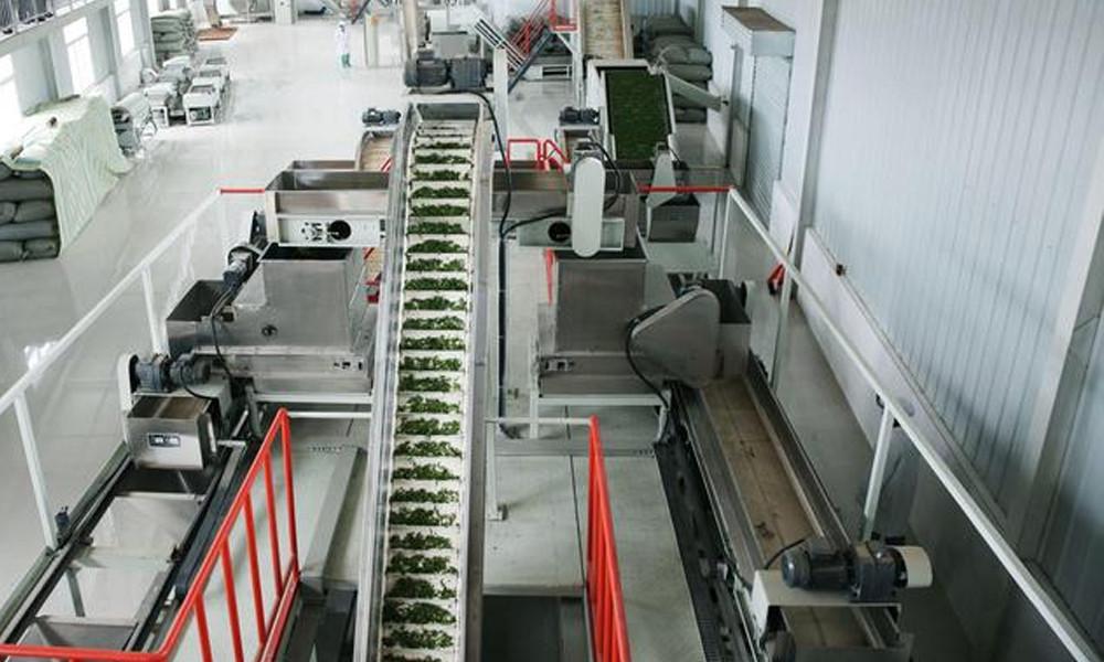 4.鲜叶到达制茶车间后,先后经过杀青、摊凉、做形、烘制等多道工序后制成干茶。如今的汉中绿茶在这个制作过程已经智能化,机器的运用,降低了成本,提高了产量。