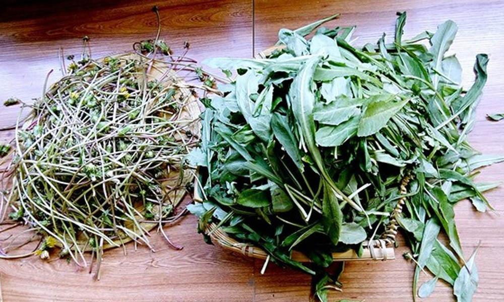 2.选择那些叶子肥肥宽宽的,蒲公英花含苞待放的时候采集的叶子制作蒲公英茶是很好的。将蒲公英的叶子和杆分别择开,待用。