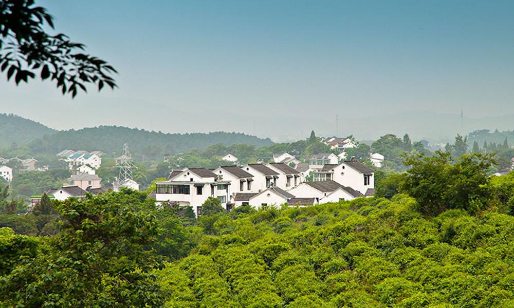 2.青山碧水、君子雅静,是对黄龙岘自然美景最好的诠释。黄龙岘茶园的面积有2000多亩,是西湖龙井村茶园的近3倍。