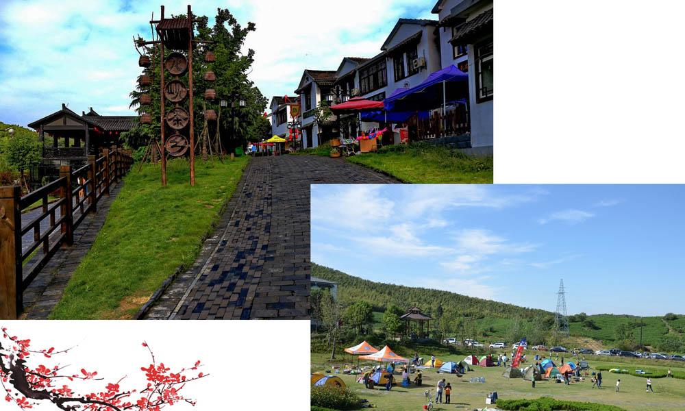 4.漫步乡村,游千顷碧绿茶园,在这里大口呼吸吧,会让你瞬间神清气爽!