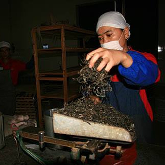 什么是普洱茶的渥堆发酵 渥堆发酵要注意哪些问题