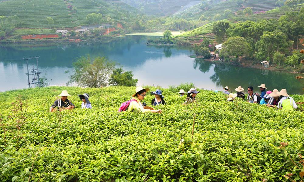 1.来到云南的一个普洱茶庄园,一路上看到的景象是:绿树成阴,碧水青山,一派湖光山色。普洱茶庄园是以普洱茶种植、生产、营销、文化、旅游、科研为一体的庄园。走进庄园,茶香四溢,沁人心脾。