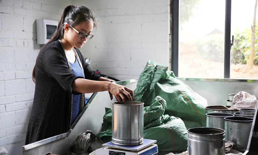 4.采摘完茶叶后,我们就去手工茶坊制作茶叶,师傅手把手的教如何从茶叶初制、茶叶精制、普洱茶压制全过程。