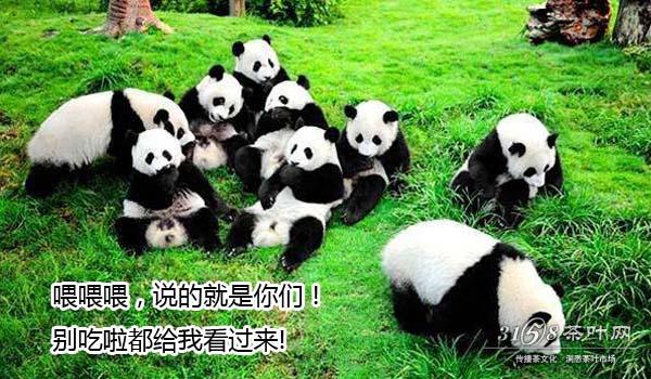 国茶熊猫茶.jpg