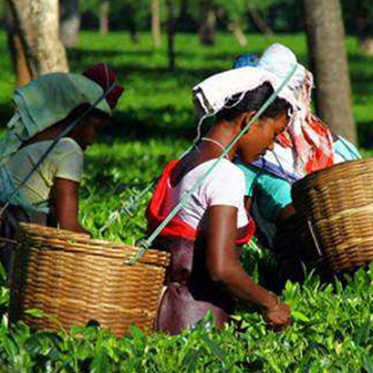 喝茶吧!爸爸 印度人爱喝什么茶