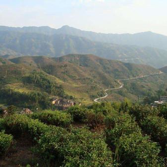 元生泰茶业带您走进梅洋村 了解失去联系的寿宁高山茶