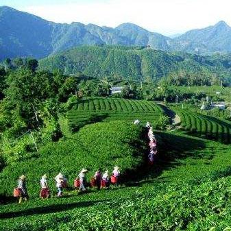 雨花茶的产地在哪里 新手该如何进行选购