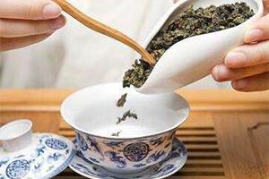 新手泡茶应该如何掌握投茶量