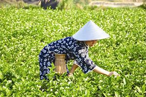 乌龙茶的故乡 福建茶文化
